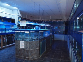 Images from our marine room