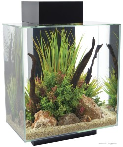 images How to Keep Aquarium Water Clear